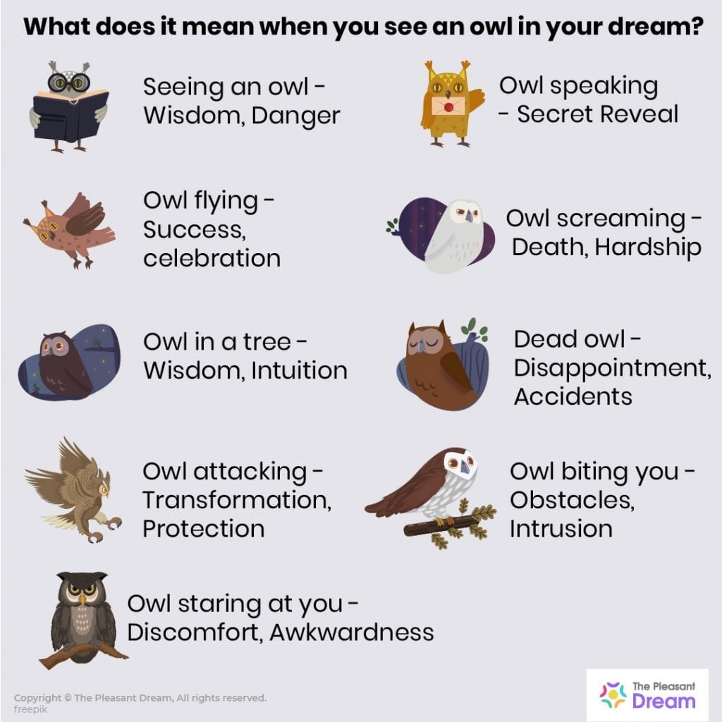 Owl in Dreams - 52 Types of Dreams Explained
