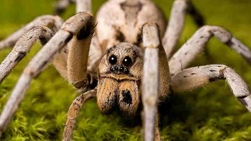 Dreams About Spiders - 47 Scenarios & Their Meanings | Spider Dream Meaning