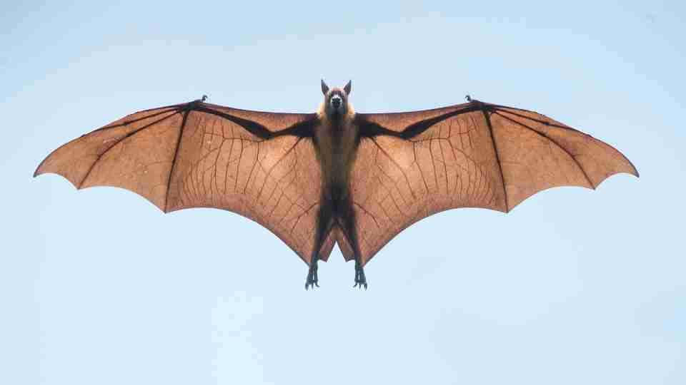 Dream about Bats - 50+ Types & Their Meanings
