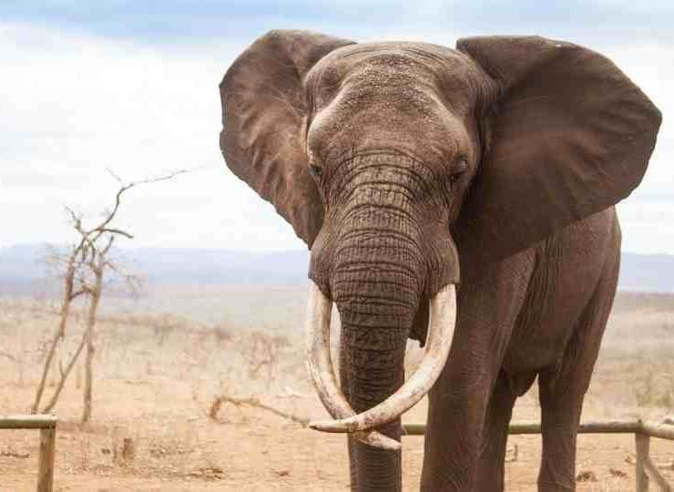 Elephants in Dreams 80 Examples & Their Meanings!