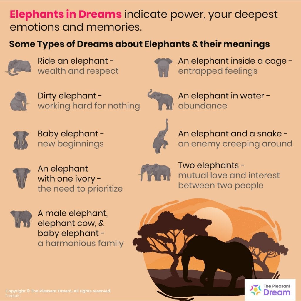 Elephants in Dreams - 94 Types & Their Meanings!