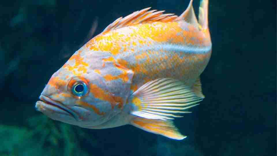 Fish Dream Meaning – 50+ Types and Interpretation