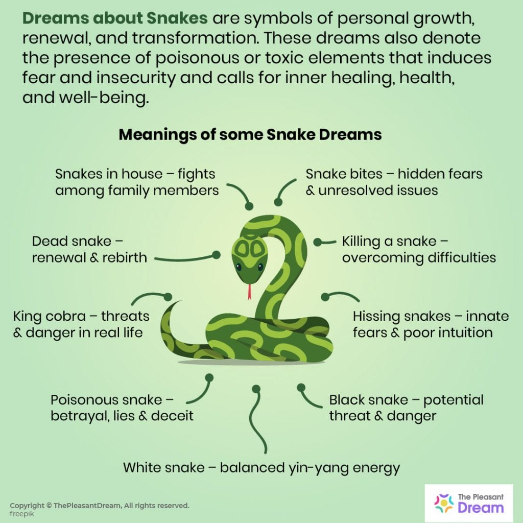 60 Types of Dreams about Snakes and Their Meanings