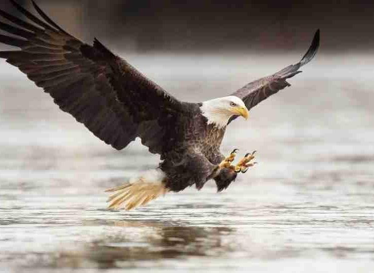 Eagle in Dream 100+ Dream Scenarios & Their Meanings