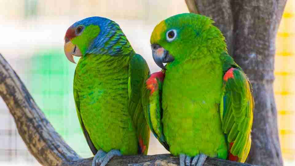 Parrot in Dream - 33 Types of Dreams & their Meanings