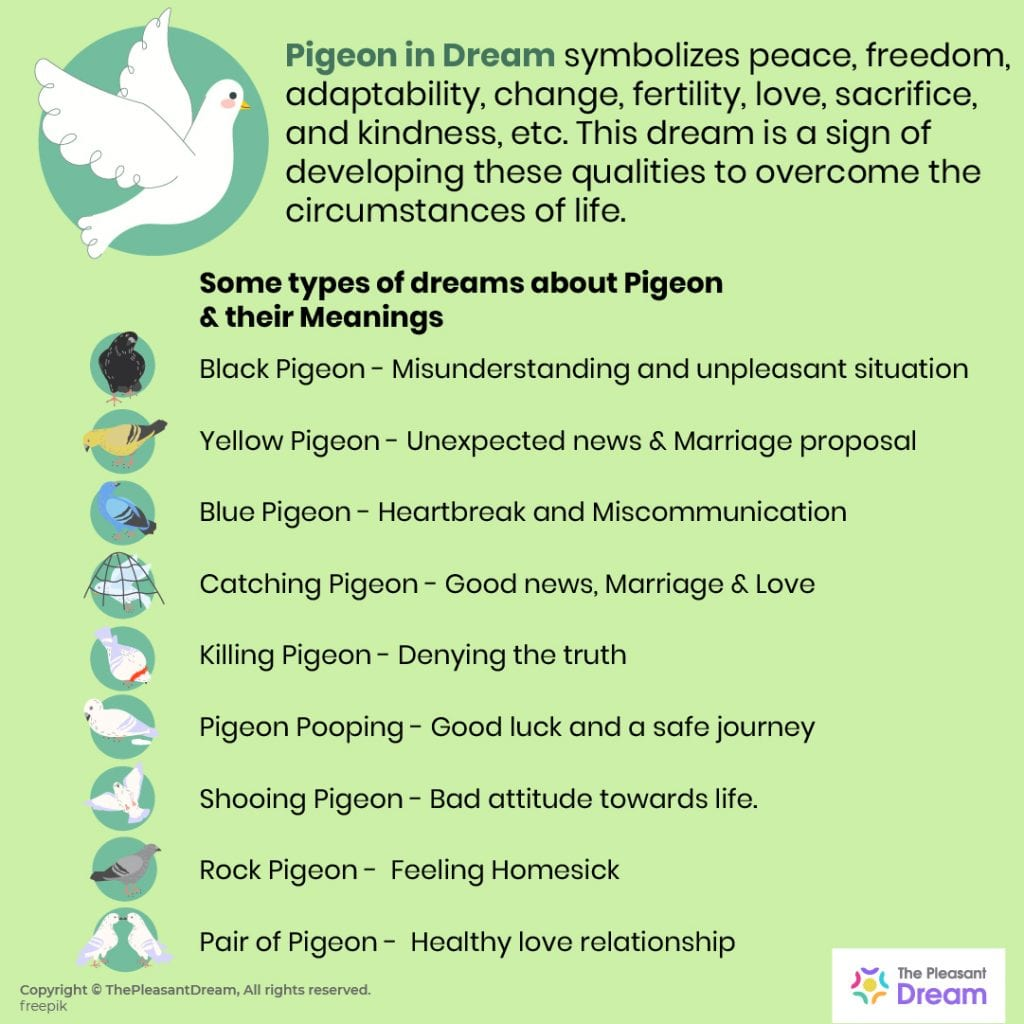 Pigeon Dream Meaning - A Complete Guide