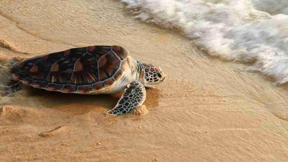 Dream About Turtles 100 Dream Scenarios & Their Interpretations