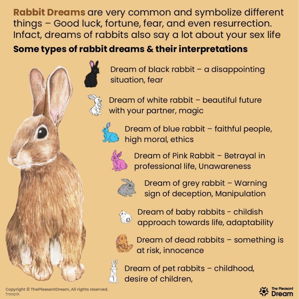 Dreaming of Rabbits – 59 Types and its Interpretation