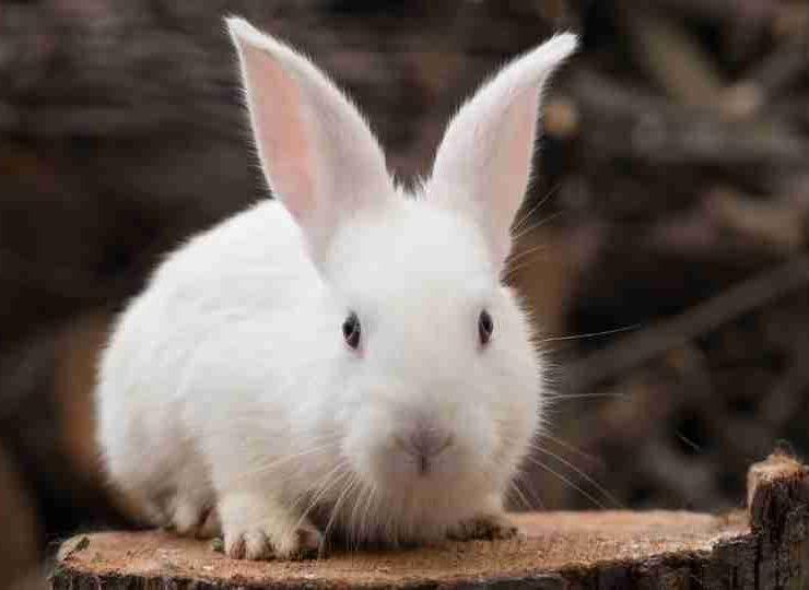 Dreaming of Rabbits – 59 Types and its Interpretation Dream of Bunny