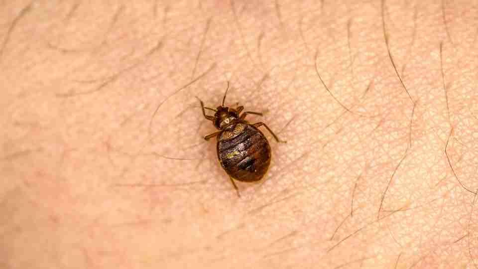 Dreams About Bugs : 91 Different Scenarios & Its Interpretations