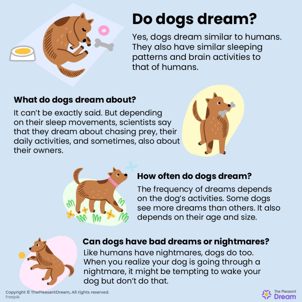 Do Dogs Dream? What do Dogs Dream about? Here's your answer!