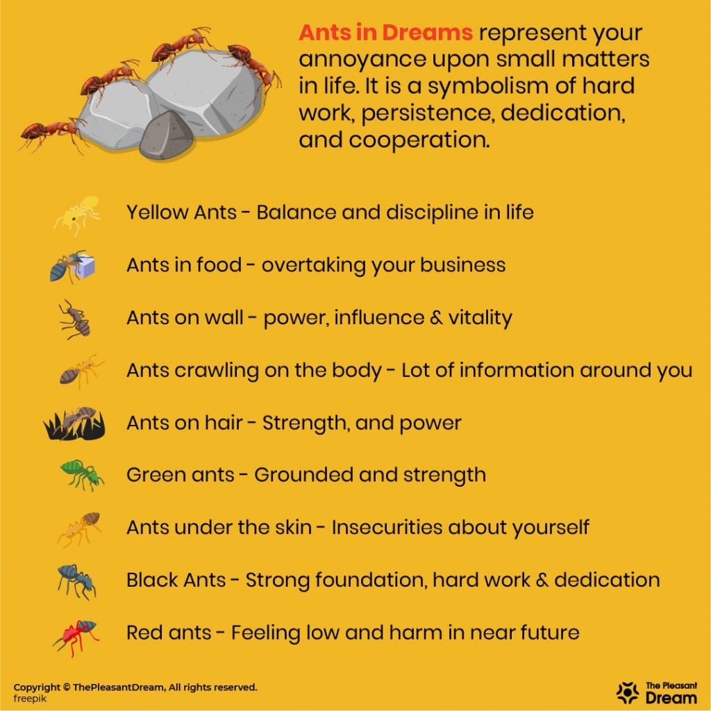 Dreaming of Ants - 100 Dream Scenarios and Its Interpretations