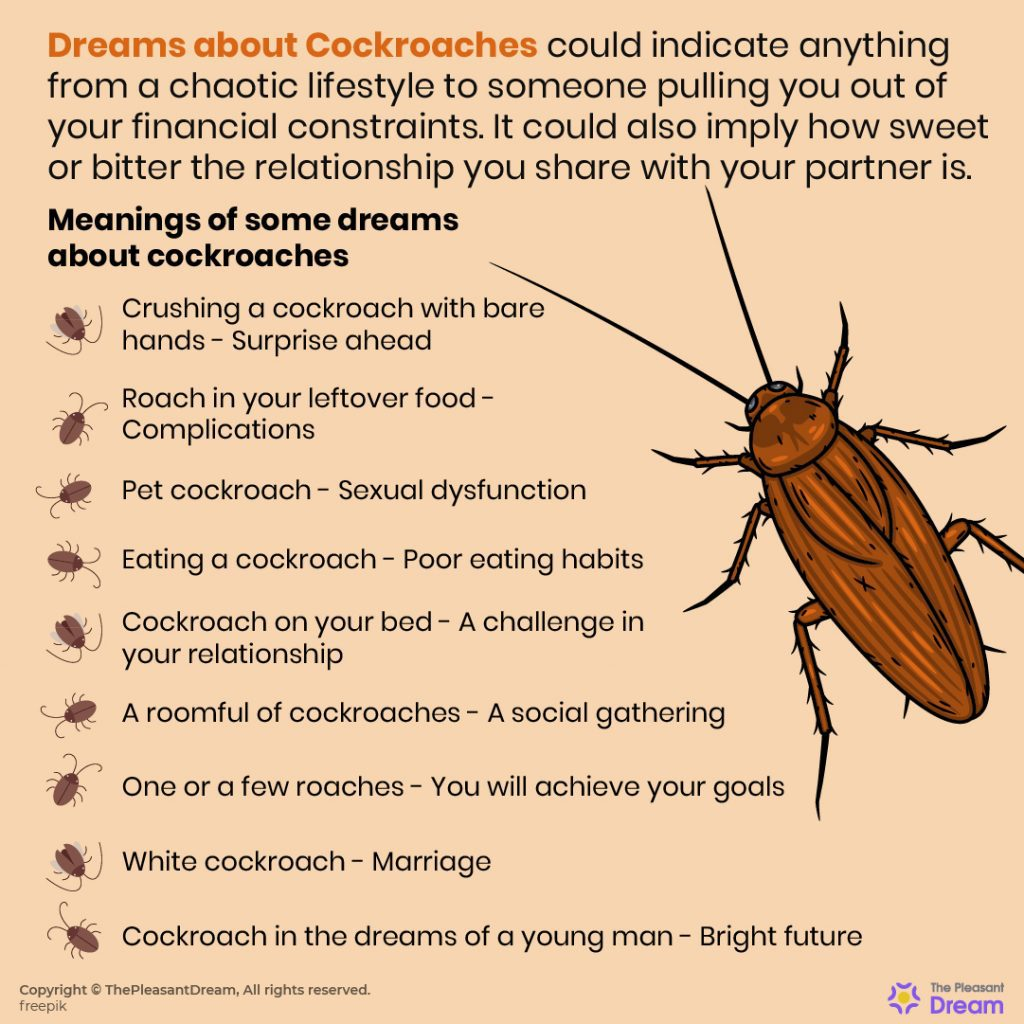 Dreaming of Cockroaches, Dream of Roaches - 97 Scenarios & Its Meanings