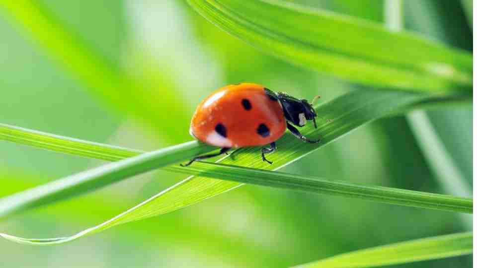 Dream about Ladybugs - 37 Dream Types and their Meanings