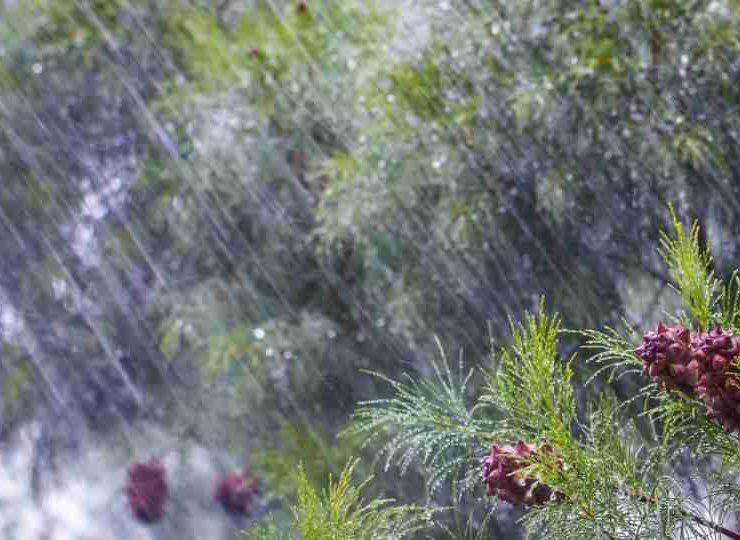 Dream of Rain - 50 Scenarios and Its Interpretations