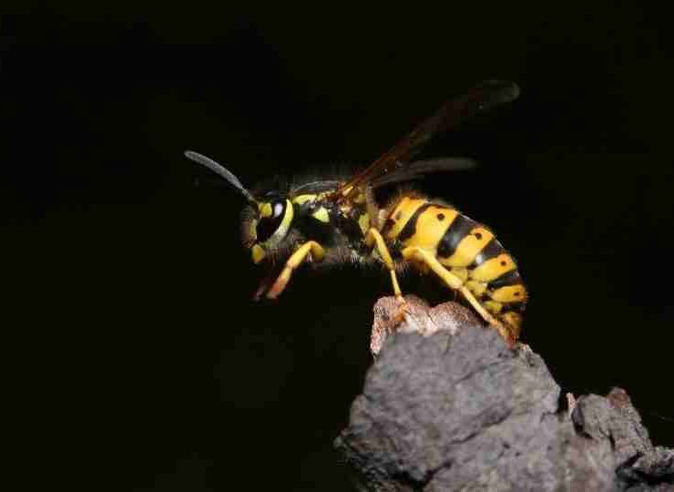 Dream about Wasps - 47 Scenarios and Their Meanings