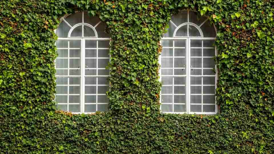 Dream of Window - 36 Types, Warning Signs and Ways To Reflect